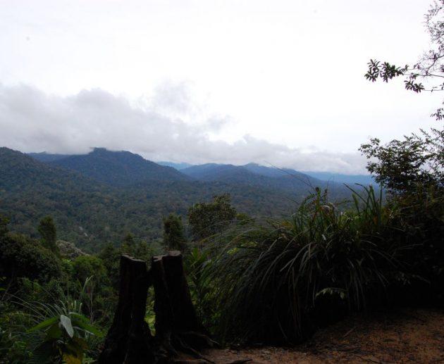 Malajzia - Taman Negara NP