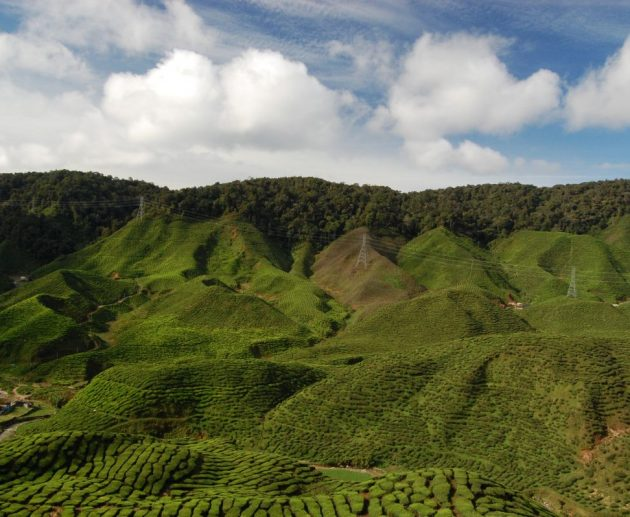 Cameron highlands - tea plantage